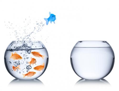 Des PME et TPE à la découverte de la Stratégie Océan Bleu